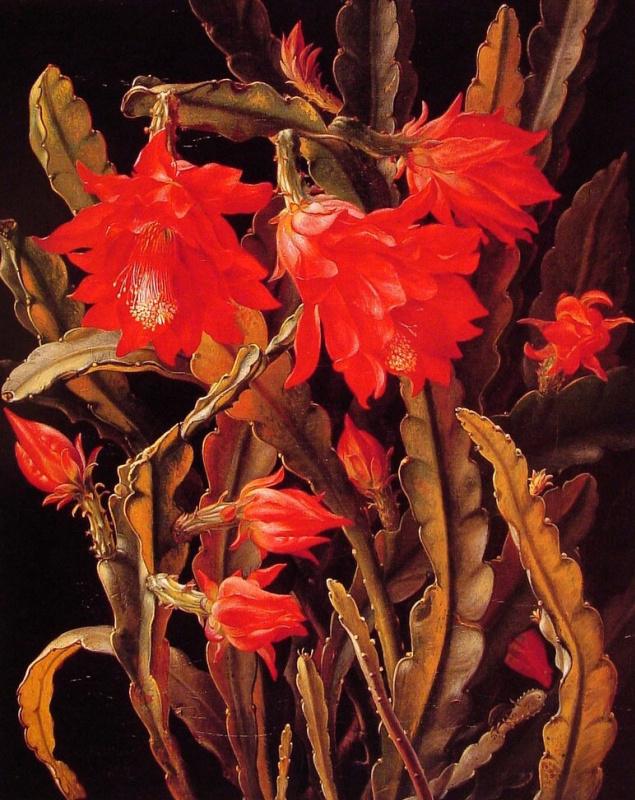 Кристиан Моллбакк. Алые цветы кактуса