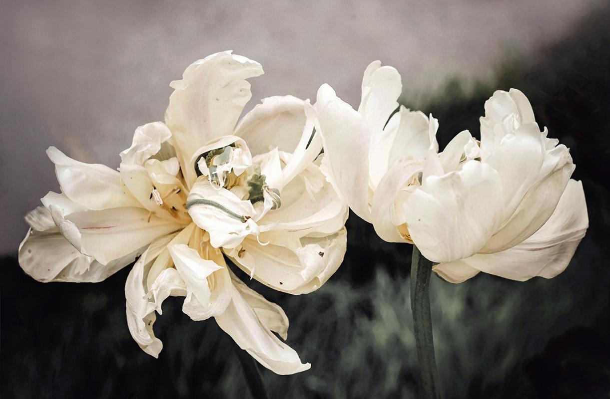 Irina Dotter. A pair of tulips