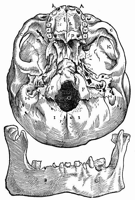 """Ханс Бальдунг. Иллюстрация к """"Анатомии"""" Вальтера Херманна Риффа, Вид основания черепа снизу; внизу нижняя челюсть"""