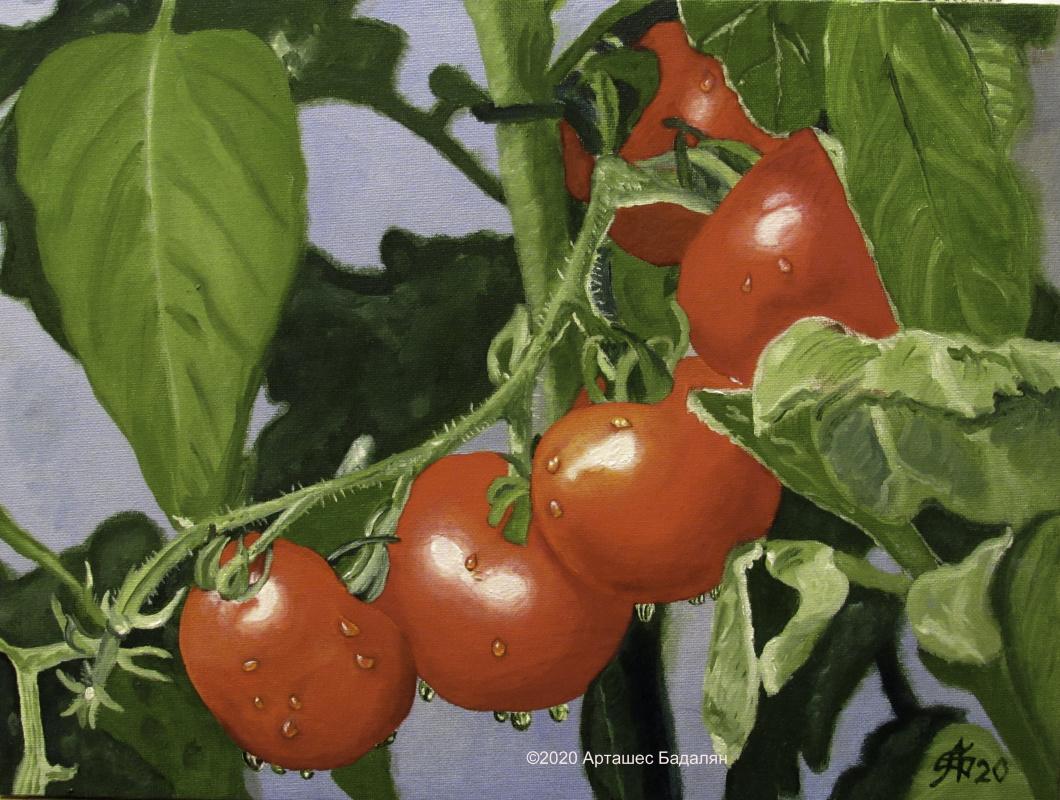 Artashes Badalyan. Ripe tomatoes - x-hardboard-m - 30x40