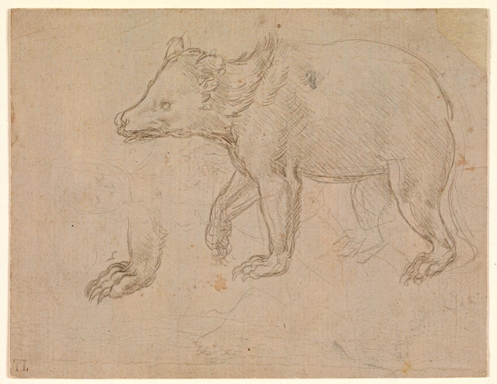 Leonardo da Vinci. The walk of a bear