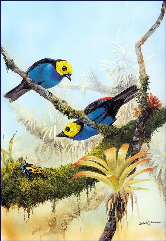 Две синие птицы на ветках