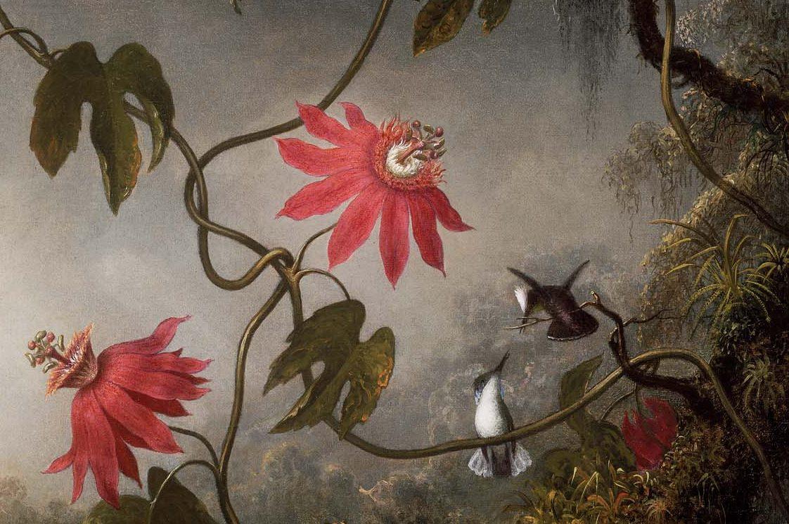 Мартин Джонсон Хед. Страстоцвет и три колибри. Фрагмент