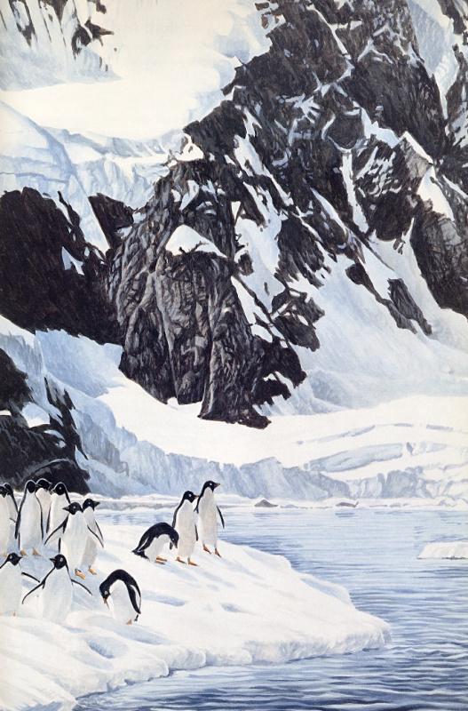 Рон Паркер. Пингвины