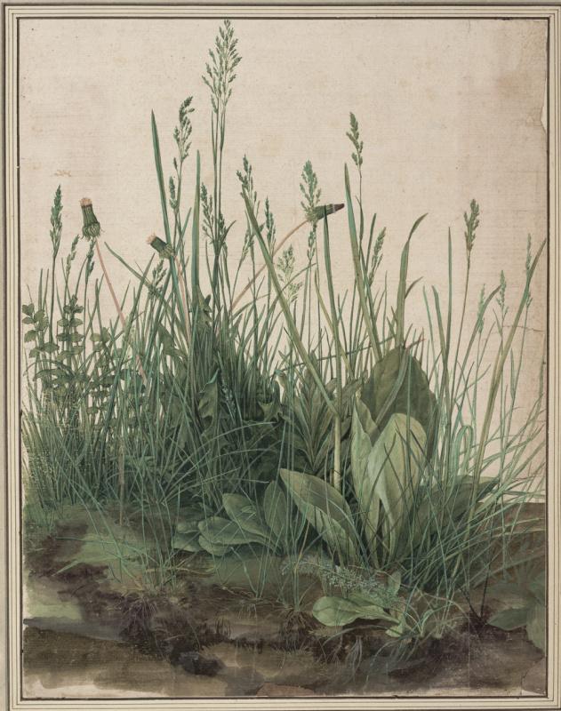 Albrecht Durer. The large piece of turf
