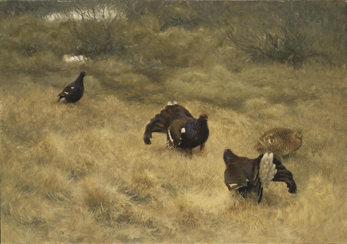 Bruno Liljefors. Black grouse in the spring