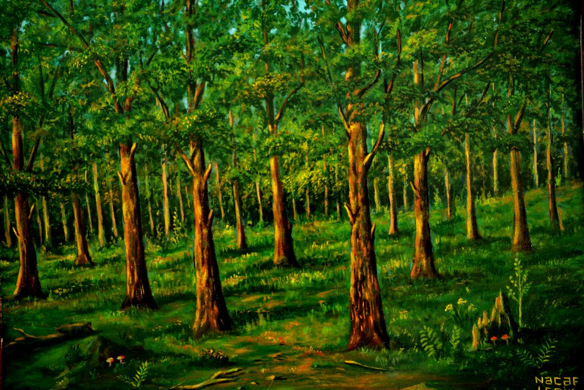 Najaf Mamedali oglu Mamedov. Forest