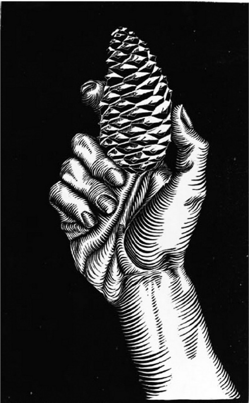 Maurits Cornelis Escher. Hand with a bump