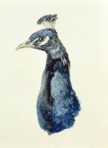Joseph Mallord William Turner. Head of a peacock