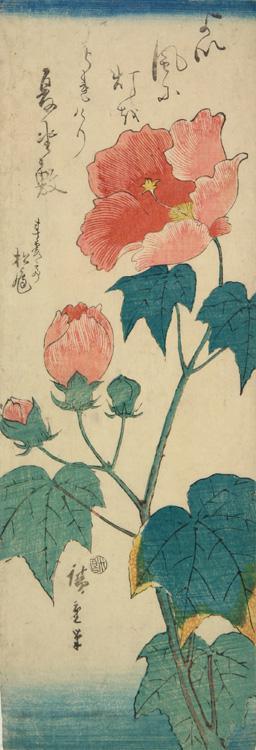Утагава Хиросигэ. Гибискус