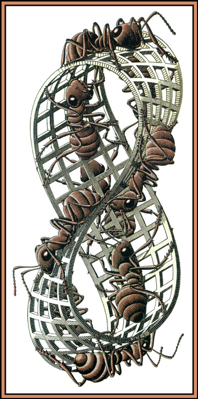Maurits Cornelis Escher. Mobius strip 2