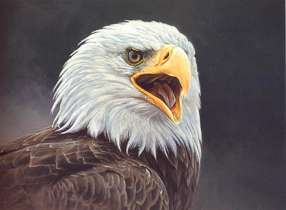 Alan Hunt. Bald eagle