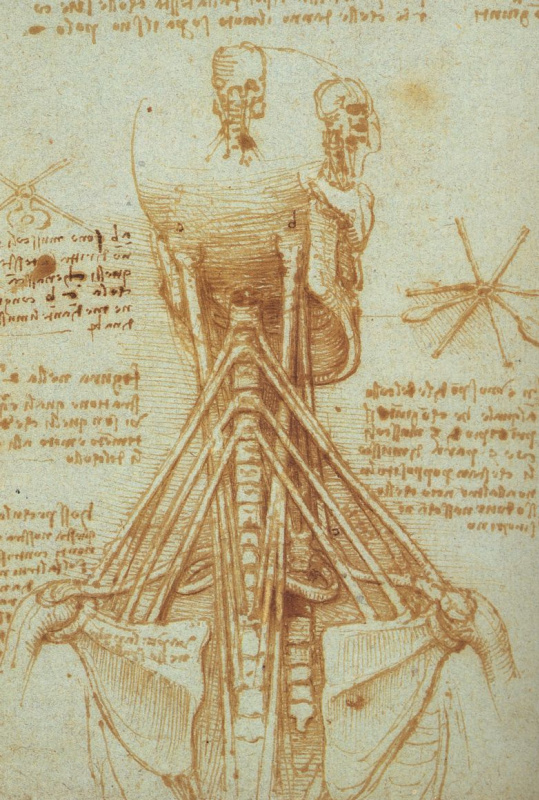 Леонардо да Винчи. Хребет. Анатомический эскиз