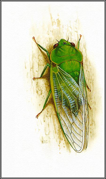 the cicadas analysis