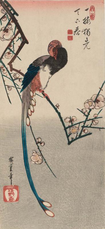 Утагава Хиросигэ. Длиннохвостая сорока-болтунья на цветущей ветке сливового дерева