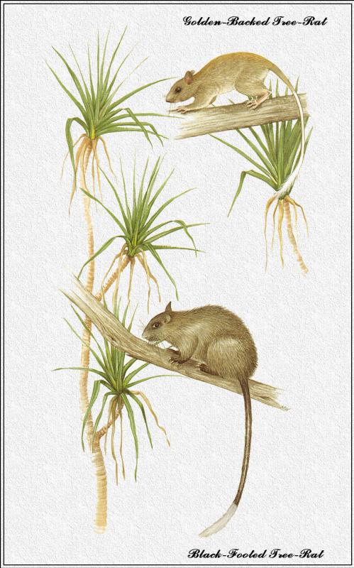 Марион Уэстмакотт. Австралийские млекопитающие 66