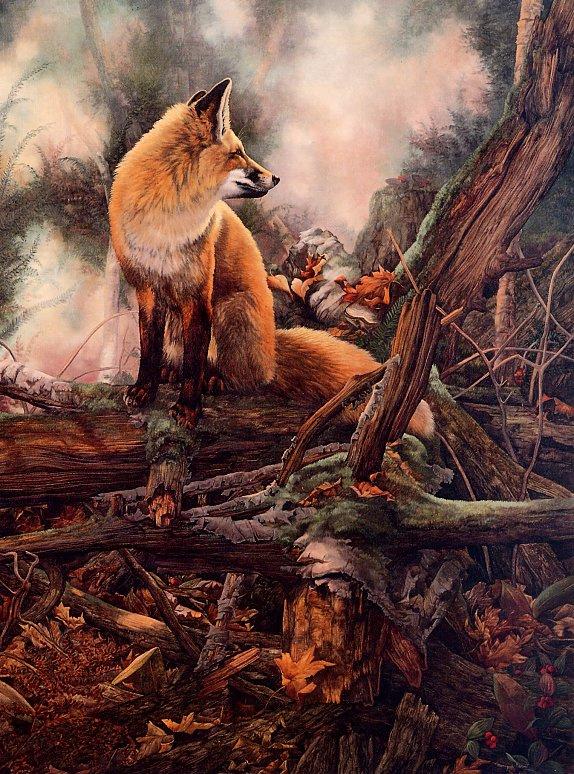 Моник Бенуа. Заколдованный лес