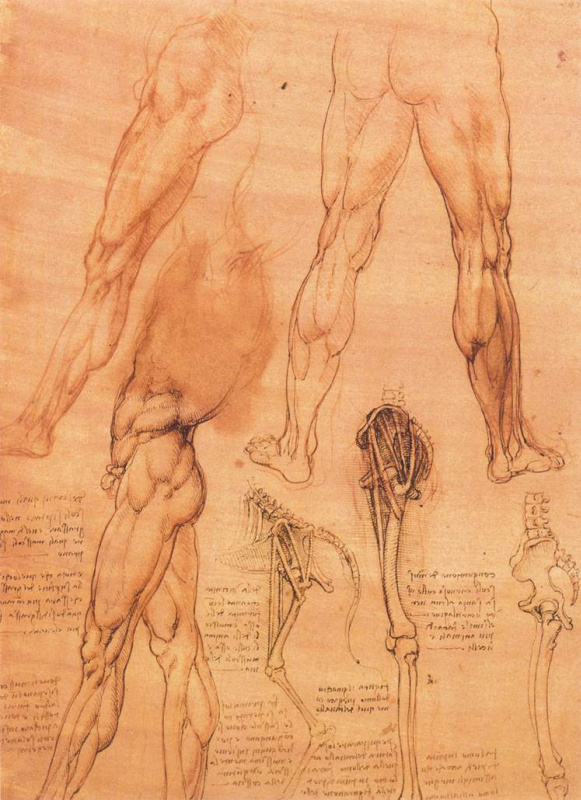 Леонардо да Винчи. Анатомические зарисовки ноги человека и ноги лошади