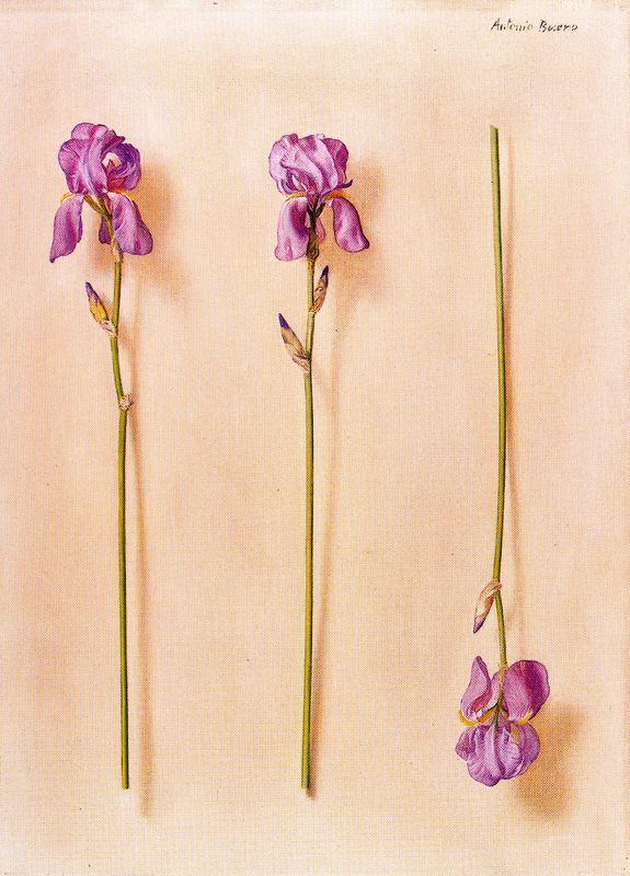 Антонио Буэно. Три цветка