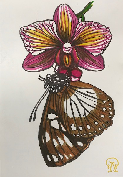 Larissa Lukaneva. Orchid and butterfly. Sketch.