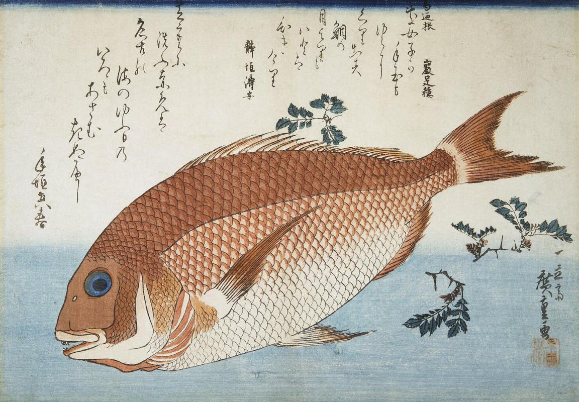"""Утагава Хиросигэ. Красный морской лещ и листья перца саншо. Серия """"Рыбы"""""""
