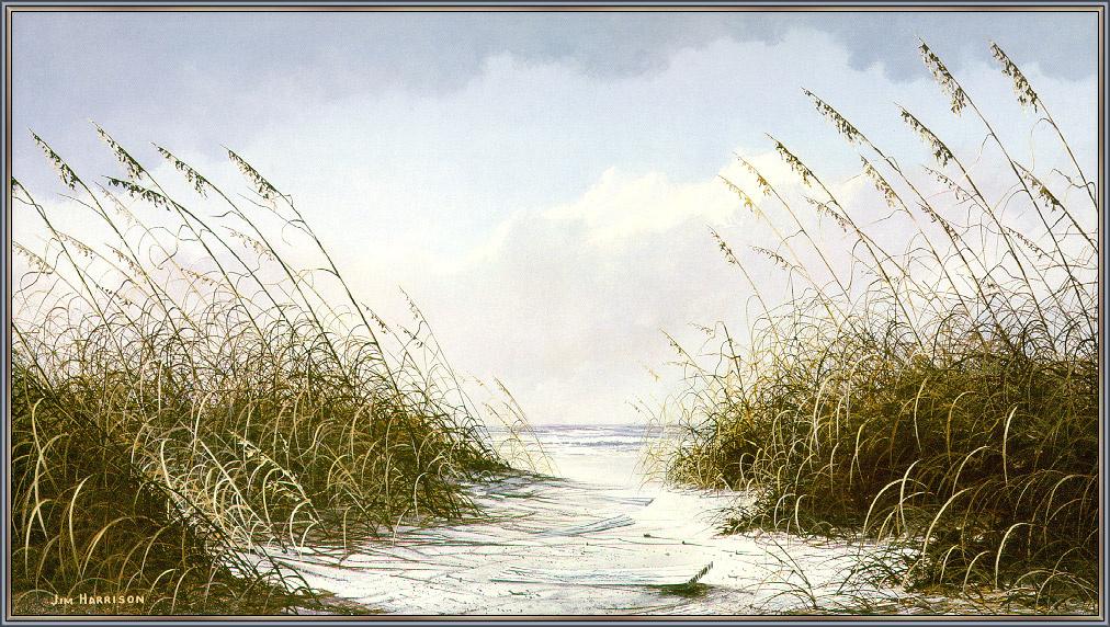 Cairwood Harrison. Coastal dunes