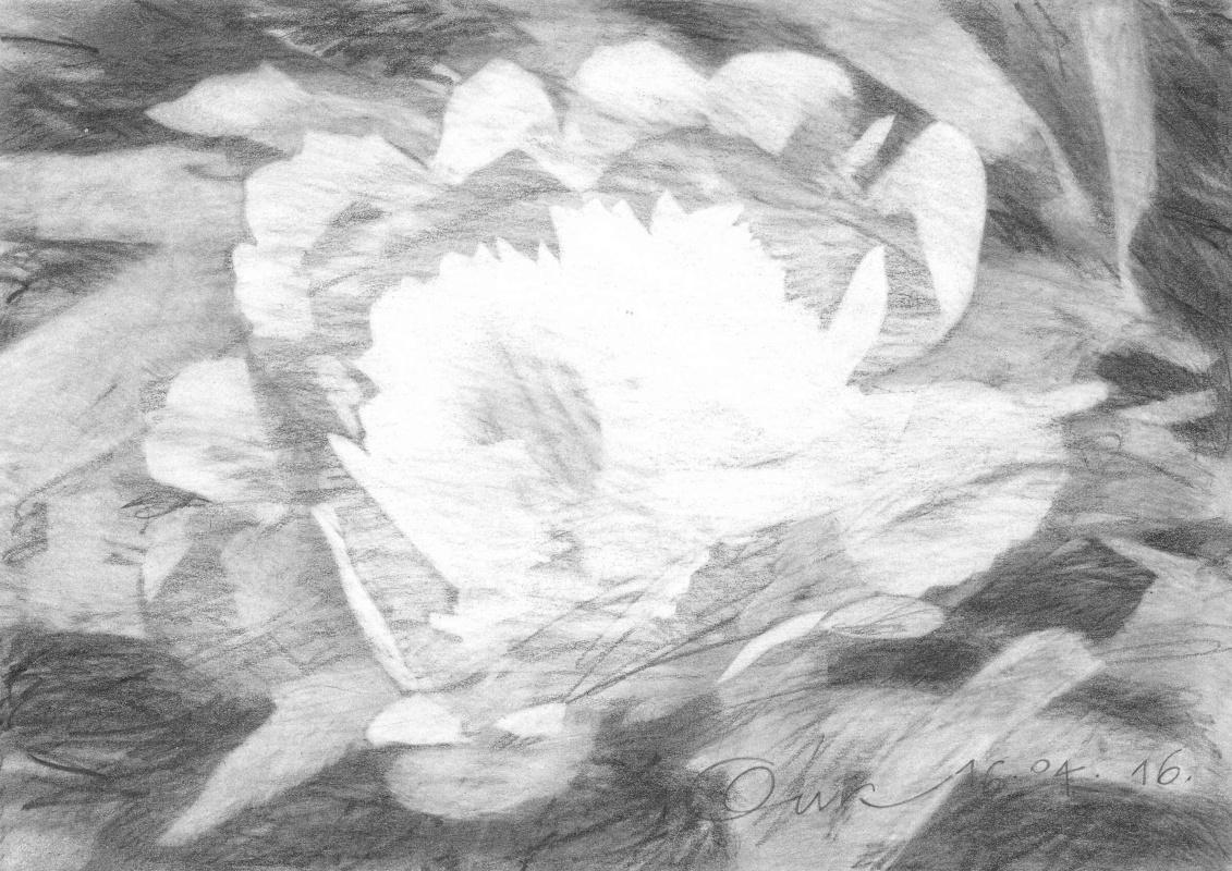 Oleg Igorevich Kochegarov. Flowers on my window_2