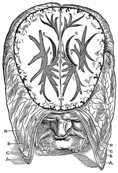 """Ханс Бальдунг. Иллюстрация к """"Анатомии"""" Вальтера Херманна Риффа, Мужская голова со вскрытой полостью больших полушарий головного мозга"""