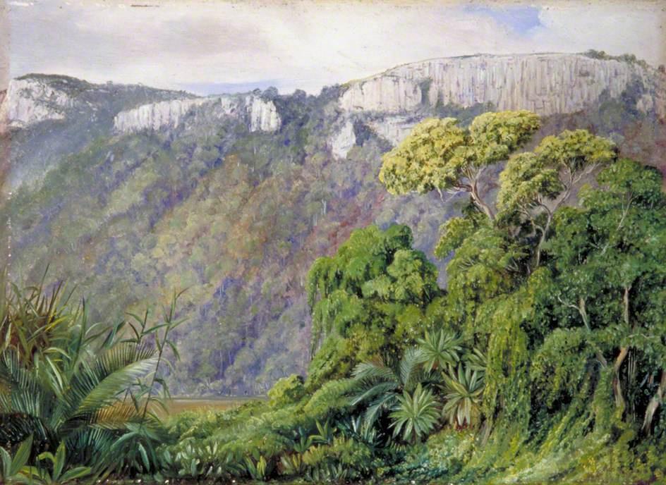 Marianna North. Vegetation on the St. John's River, Caffraria