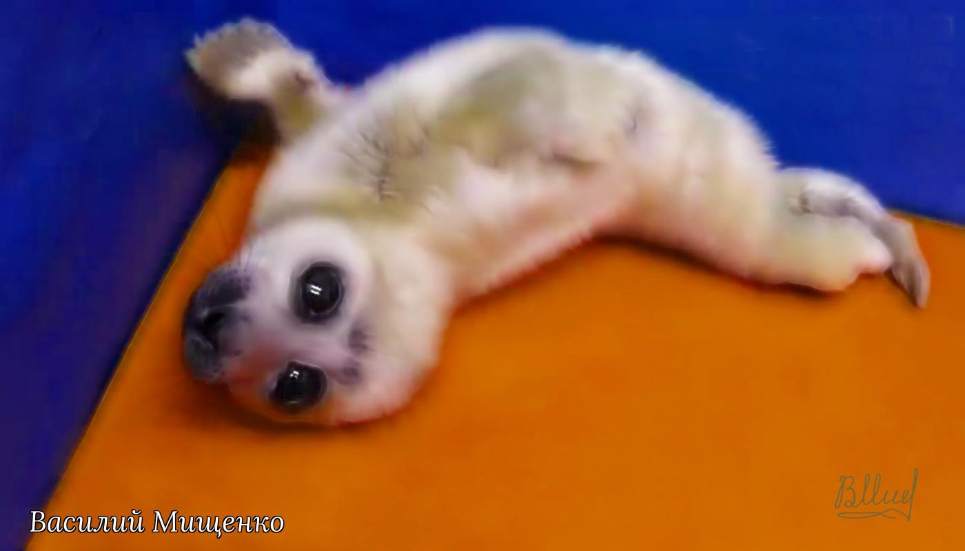 Vasiliy Mishchenko. Baby seal