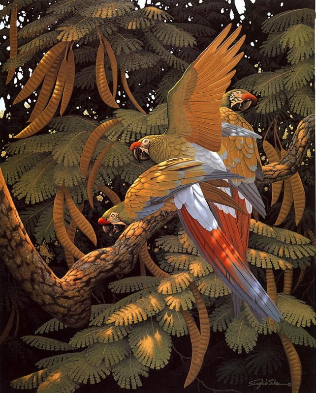 Ричард Слоан. Дерево фасоли