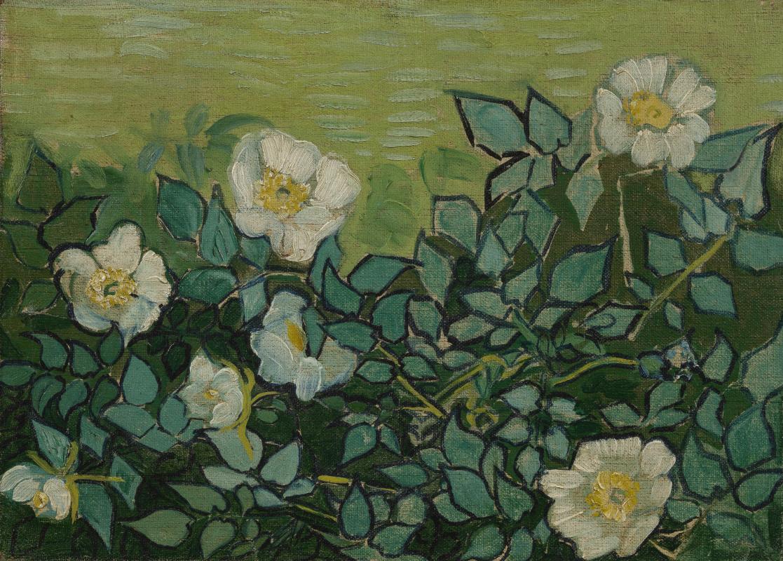 Винсент Ван Гог. Дикие розы