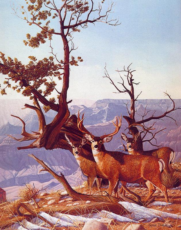 Джин Додг. Чернохвостый олень