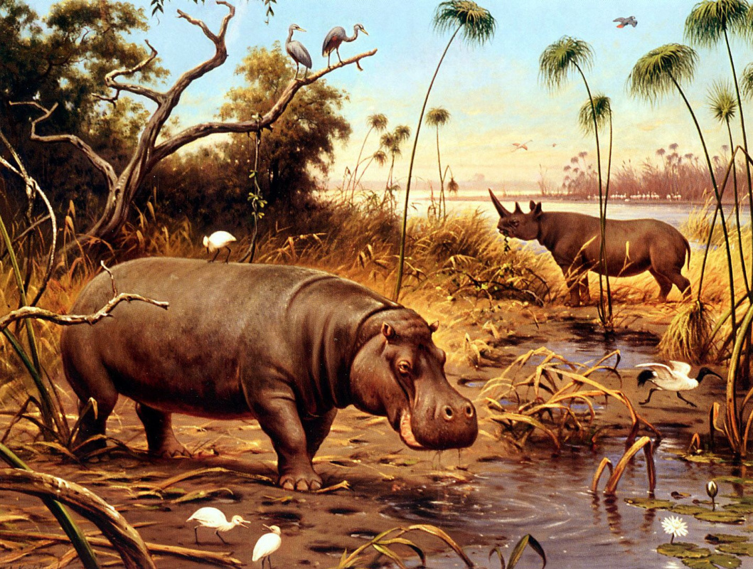 Marian Adrianus Kukkuk. The Hippo and Rhino