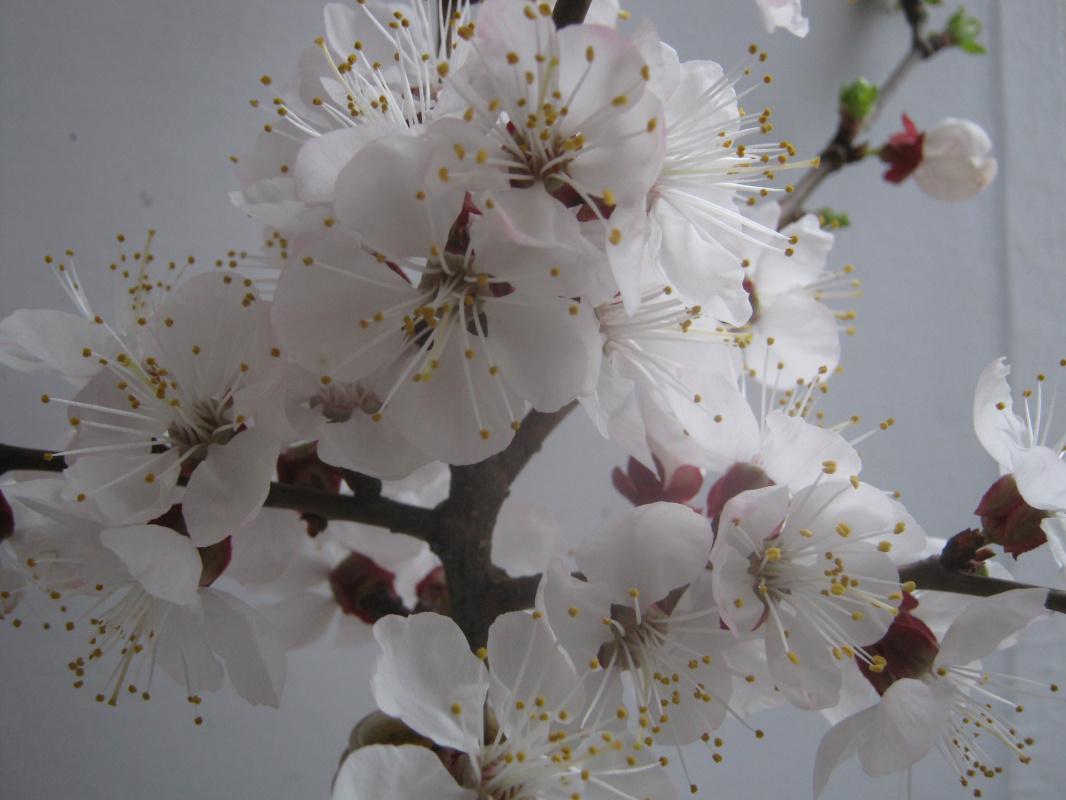 "Alexey Grishankov (Alegri). ""April bloom"" (4)"