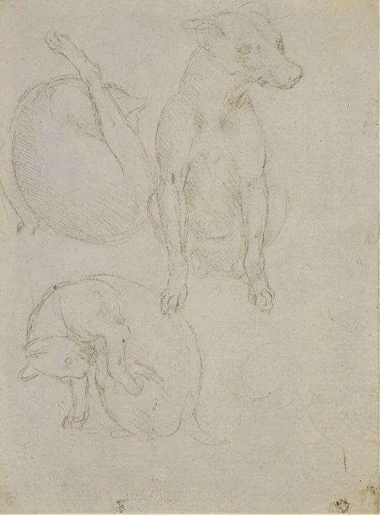 Леонардо да Винчи. Два этюда кошки и этюд собаки