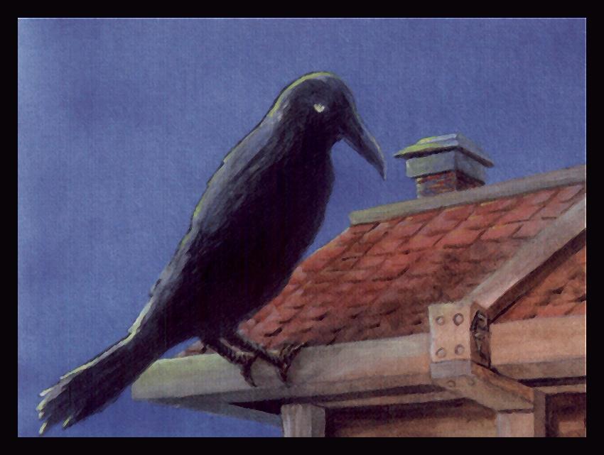 Robert Carlos. Raven watches
