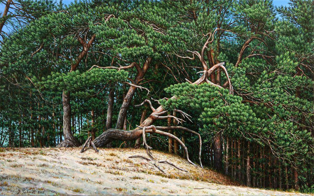 Юрген Шмидт. Pine trees on sand dunes