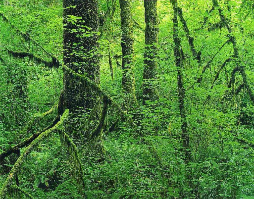Eliot Porter. Forest landscape 6