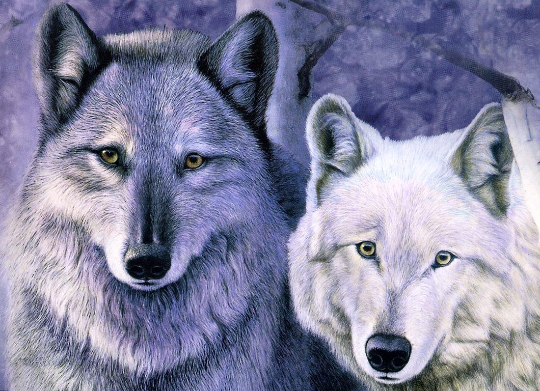 Расти Френтнер. Волки