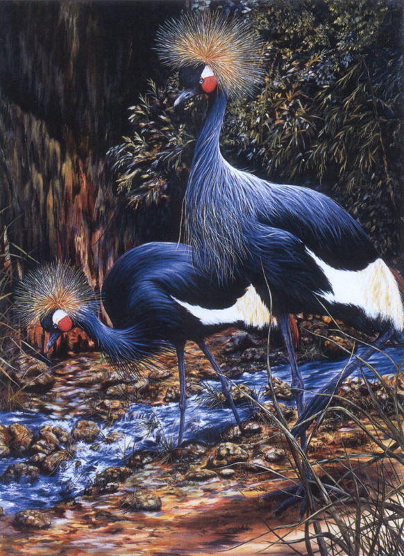 Салли Линн Дэвис. Западно-африканские венценосные журавли