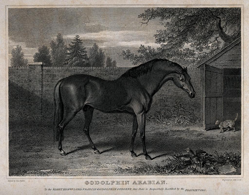 George Stubbs. Godolphin