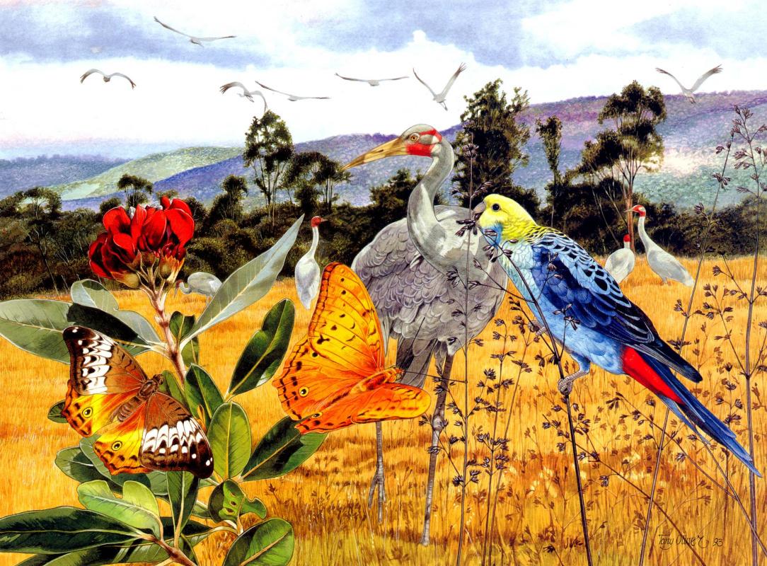 Тони Оливер. Австралийский журавль