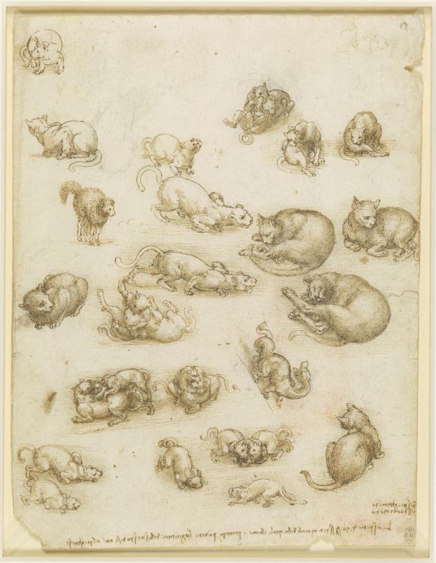 Леонардо да Винчи. Наброски кошек, драконов и других животных