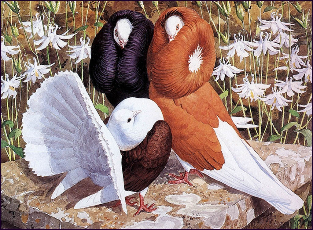 Charles Tannicliffe. Decorative doves