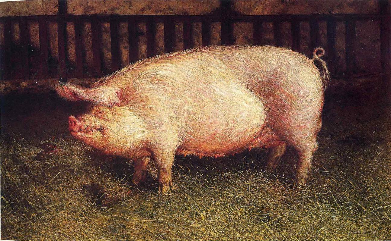 Jamie Wyeth. Portrait of a pig