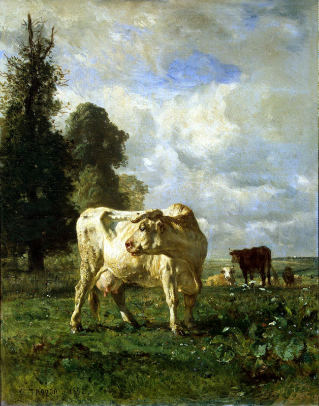 Коровы в поле