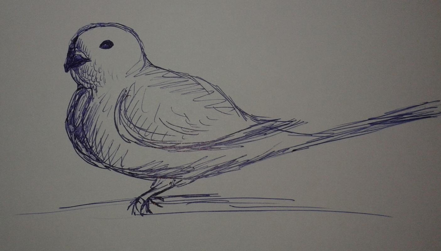 Zina Vladimirovna Parisva. Bird (2)