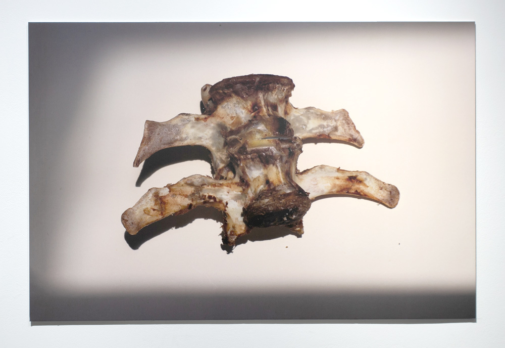 Rashid Nurekeev. Bones and hankering dogs