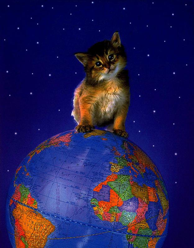 Марк Плус. Глобал